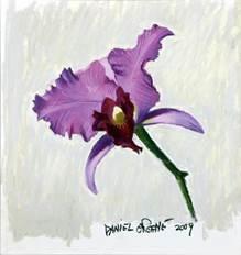 "Daniel E. Greene ""Pink Orchid on Light Background"""